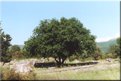 oracledodoni