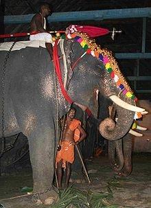 220px-Thrippunithura-Elephant1_crop